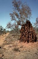 Cote d'Ivoire ; termittieres<br /> <br /> <br /> <br /> (date inconnue)<br /> <br /> PHOTO : Michel Faugere Publiphoto- Agence Quebec Presse