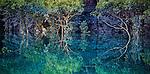 Sale River, Kimberley, Western Australia; mangroves