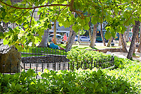 This is probably not the Chamber of Commerce's version of a photo of Kuhio Beach.  Instead, it is an example of how the photographer's decisions influence a scene.  First, I chose NOT to include any of the ocean in this photo; instead, I pointed the camera toward the street and into the sun to capture the backlit greenery.  Then I had to position myself very carefully to hide trash barrels, etc. behind those leaves.<br /> <br /> Canon EOS 5D, 24-105L lens