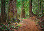This is a wonderful path in the old growth forrest across from Cape Perpetua along the Oregon Coast