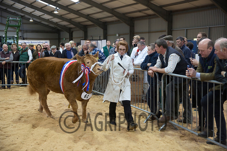 The East Of England Smithfield Festival 2016<br /> Picture Tim Scrivener - www.agriphoto.com<br /> Mobile 07850 303986 e-mail tim@agriphoto.com<br />           ….covering agriculture in the Uk….