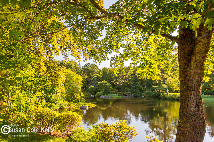 Asticou Azalea Gardens in July in Northeast Harbor, Maine, USA