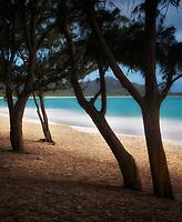 Ironwood trees and beach. Kailua Beach Park. Oahu, Hawaii