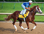 El Padrino , trained by Todd Pletcher and to be ridden by Rafael Bejarano, works out in preparation for the 138th Kentucky Derby at Churchill Downs in Louisville, Kentucky on May 3, 2012