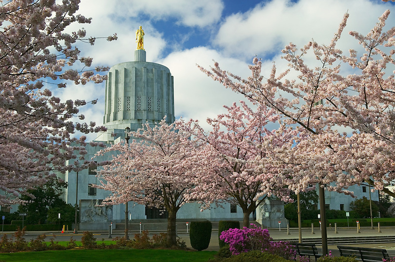 Golden Pioneer statue and cherry Blossoms at Oregon State Capitol, Salem, OR
