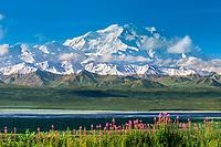 North Face Of 20, 3020+ Ft. Mt. Denali,  Fireweed, Denali National Park, Alaska