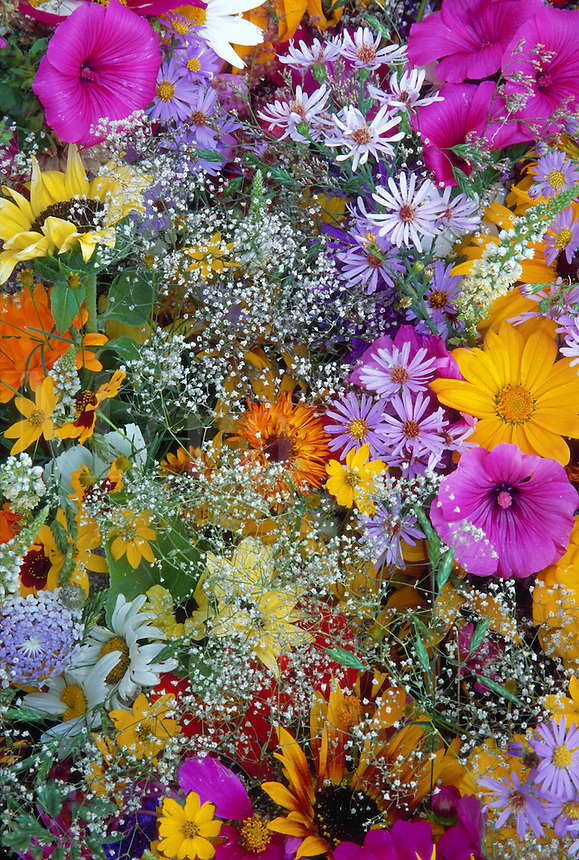 Colorful summer bouquet