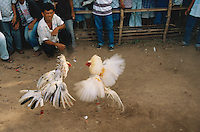 Philippines. Negros Island. Province of Negros Occidental, located in the  Western Visayas region. Barangay (village) Kampo Berde. Cockfights on a sunday afternnon. Crowd of men and their animals, all fighting cocks. © 1999 Didier Ruef