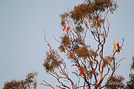 Image Ref: A124<br />