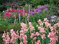 Iris and other flowers at Schreiner's  iris Gardens. Brooks, Oregon