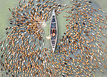 Hundreds of ducks actually form the shape of a giant duck as they mass on a lake.  The birds swarm around a duck farmer as he stands in the shallow lake giving them their feed.<br /> <br /> Photographer Abdul Momin, 29, captured these aerial shots in Sonatola Upazila, Bangladesh.  SEE OUR COPY FOR DETAILS.<br /> <br /> Please byline: Abdul Momin/Solent News<br /> <br /> © Abdul Momin/Solent News & Photo Agency<br /> UK +44 (0) 2380 458800