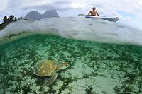Green Turtle and Kayaker, Chelonia mydas, Lord Howe Island, Australia, Pacific Ocean