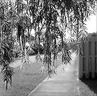 Morning in Kendall<br />