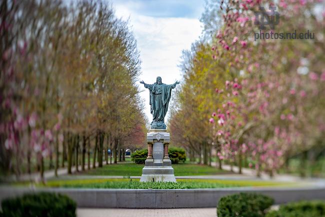 April 12, 2020; Jesus statue on Main Quad (Photo by Matt Cashore/University of Notre Dame)