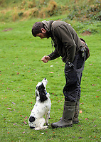 FAO JANET TOMLINSON, DAILY MAIL PICTURE DESK<br />Pictured: James Smith with one of the dogs Wednesday 23 November 2016<br />Re: The Dog House in the village of Talog, Carmarthenshire, Wales, UK
