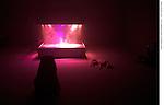 PIERRE HUYGHE<br /> <br /> L'Expédition scintillante, 2002, Acte 2, Untitled (Light Box)<br /> Système de fumée et de lumière, son, 200 x 190 x 155 cm<br /> chien Human (2011-2013)<br /> Lieu : Centre Pompidou<br /> Ville : Paris<br /> Le : 24/11/2013