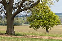 18-5-2021 Farming landscape  in Rutland <br /> ©Tim Scrivener Photographer 07850 303986<br />      ....Covering Agriculture In The UK....