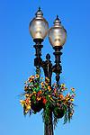 Lights & Flowers, Balboa, CA