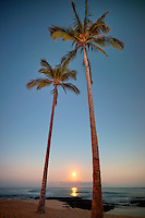 Moonset and palm trees. Hawaii, The Big Island.