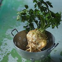 Gastronomie: Cèleri rave de Joel Thebault, plaine de l'ÎLe de France