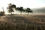 Europa, DEU, Deutschland, Hessen, Landkreis Fulda, Luedermuend, Morgenstimmung, Agrarlandschaft, Nebel, Obstbaeume, Kategorien und Themen, Natur, Umwelt, Landschaft, Jahreszeiten, Stimmungen, Landschaftsfotografie, Landschaften, Landschaftsphoto, Landschaftsphotographie, Wetter, Wetterelemente, Wetterlage, Wetterkunde, Witterung, Witterungsbedingungen, Wettererscheinungen, Meteorologie, Wettervorhersage<br /> <br /> [Fuer die Nutzung gelten die jeweils gueltigen Allgemeinen Liefer-und Geschaeftsbedingungen. Nutzung nur gegen Verwendungsmeldung und Nachweis. Download der AGB unter http://www.image-box.com oder werden auf Anfrage zugesendet. Freigabe ist vorher erforderlich. Jede Nutzung des Fotos ist honorarpflichtig gemaess derzeit gueltiger MFM Liste - Kontakt, Uwe Schmid-Fotografie, Duisburg, Tel. (+49).2065.677997, ..archiv@image-box.com, www.image-box.com]