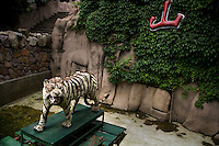 A stuff tiger stands at the Qingdao Zoo for tourists to take pictures with in Qingdao, Shandong, China.