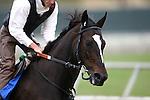 August 5th 2010: Zenyatta gallops under Steve Willard at Del Mar Race Track in Del Mar CA.