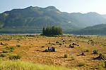Washington State Scenic