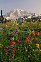 Mount Rainier and wildflowers.  Mount Rainier National Park, Washington.  Summer.