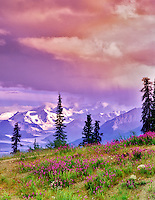 Mt. Sanford and fireweed as seen from the Glenn Highway, Alaska