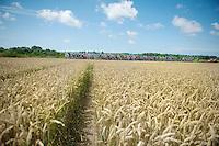 peloton plowing through the cornfields of Northren France<br /> <br /> 2014 Tour de France<br /> stage 4: Le Touquet-Paris-Plage/Lille Métropole (163km)