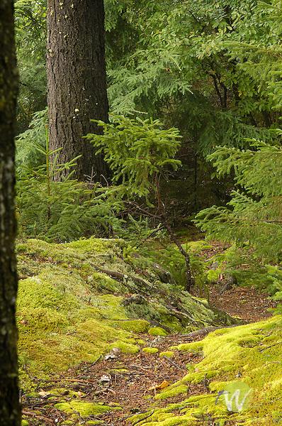 Mossy vibrant pathway