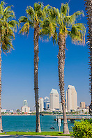 palm trees and downtown San Diego, Coronado Island, San Diego, California, USA, Pacific Ocean