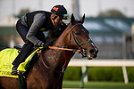 LOUISVILLE, KY - MAY 02: Bolt d'Oro gallops in preparation for the Kentucky Derby at Churchill Downs on May 2, 2018 in Louisville, Kentucky. (Photo by Alex Evers/Eclipse Sportswire/Getty Images)