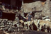 Europe/France/Midi-Pyrénées/09/Ariège/Vallée de Vicdessos: Fermière et brebis<br /> PHOTO D'ARCHIVES // ARCHIVAL IMAGES<br /> FRANCE 1980