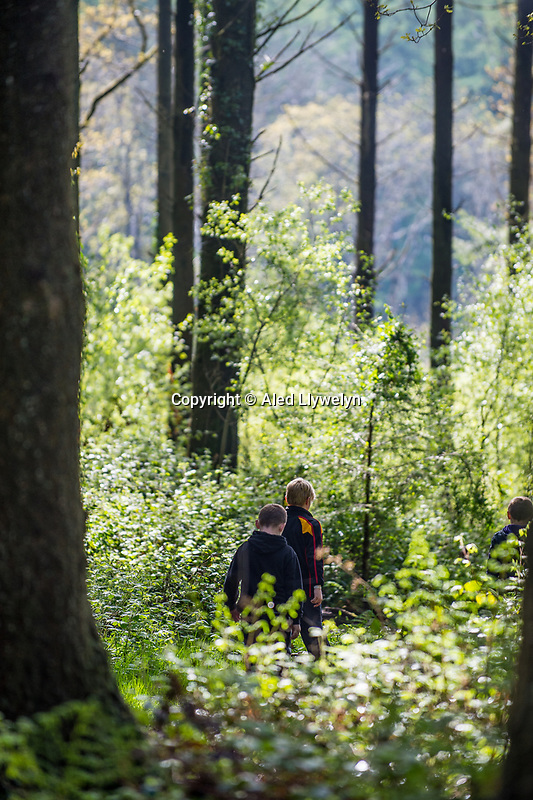 Young Boys walk through woodland in Canaston Bridge, Pembrokeshire
