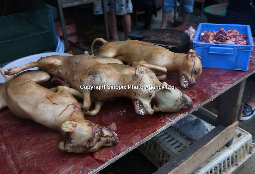 Dogs are seen for sale in Yulin, one day before the Yulin Dog Meat Festival kicks off, Yulin, Guangxi Province, China, 20 June 2016.<br /> <br /> photo by str/Sinopix