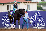 DEL MAR, CA - NOVEMBER 01: Elate, owned by Claiborne Farm & Adele Dilschneider and trained by William I. Mott, exercises in preparation for Longines Breeders' Cup Distaff at Del Mar Thoroughbred Club on November 1, 2017 in Del Mar, California. (Photo by Kazushi Ishida/Eclipse Sportswire/Breeders Cup)