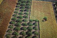 Europe/France/Aquitaine/24/Dordogne/Vallée de la Dordogne/Périgord/Périgord noir/Env de Sainte-Mondane: cultures dans la vallée aux environs du chateau de Fénélon : Noyer, maïs et tabac - Vue aérienne