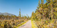 Road through wetlands and native forest near Haast, South Westland, West Coast, New Zealand
