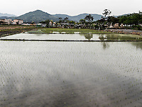 Reisfelder bei Gyeongju, Provinz Gyeongsangbuk-do, Südkorea, Asien<br /> Paddies near Gyeongju,  province Gyeongsangbuk-do, South Korea, Asia
