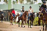 HALLANDALE BEACH, FL - JANUARY 26: The Hooves of Giant Expectations before the Pegasus World Cup Invitational at Gulfstream Park Race Track on January 26, 2018 in Hallandale Beach, Florida. (Photo by Alex Evers/Eclipse Sportswire/Getty Images)