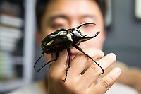 Ma Xiao Kun, 32, with an Atlas Beetle (Chalcosoma atlas) in a store at Beijing's Guanyuan pet market. The species found is in southern Asia, notably in Malaysia and Indonesia.