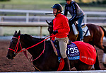 October 27, 2019 : Breeders' Cup Juvenile entrant Full Flat, trained by Hideyuki Mori, exercises in preparation for the Breeders' Cup World Championships at Santa Anita Park in Arcadia, California on October 27, 2019. Scott Serio/Eclipse Sportswire/Breeders' Cup/CSM Scott Serio/Eclipse Sportswire/Breeders' Cup/CSM