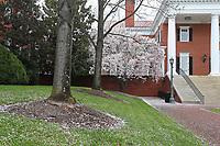 Spring has sprung around the Darden School of Business University of Virginia. Photo/Andrew Shurtleff Photography, LLC.