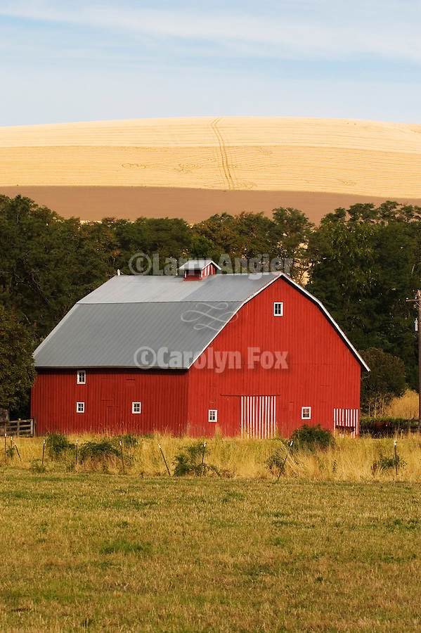Red barn in a valley beneath a hill covered with wheat fields in southern Washington.
