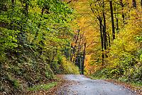 Unpaved mountain road with peal autmn foliage, Vermont, USA.