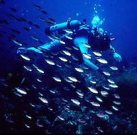 Scuba Diver near San Carlos Mexico