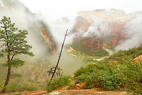 This photo was taken on one of the trail switchbacks on the trail to Observation Point.  The big point looking in the valley behind the fog is the well known Angle's Landing.