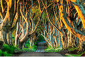 Tom Mackie, LANDSCAPES, LANDSCHAFTEN, PAISAJES, FOTO, photos,+County Antrim, Dark Hedges, Europe, Game of Thrones, Northern Ireland, Tom Mackie, UK, United Kingdom, basalt, country lane,+horizontal, horizontals, landscape, landscapes, nobody, path, pathways, road, tourist attraction, tree, trees, yellow,County+Antrim, Dark Hedges, Europe, Game of Thrones, Northern Ireland, Tom Mackie, UK, United Kingdom, basalt, country lane, horizon+tal, horizontals, landscape, landscapes, nobody, path, pathways, road, tourist attraction, tree, trees, yellow+,GBTM190330-1,#L#, EVERYDAY ,Ireland